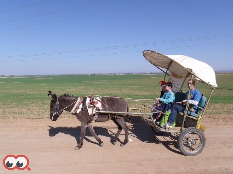 החווה עוסקת כיום בחקלאות, בתיירות, סדנאות ועריכת טיולים עם חמורים