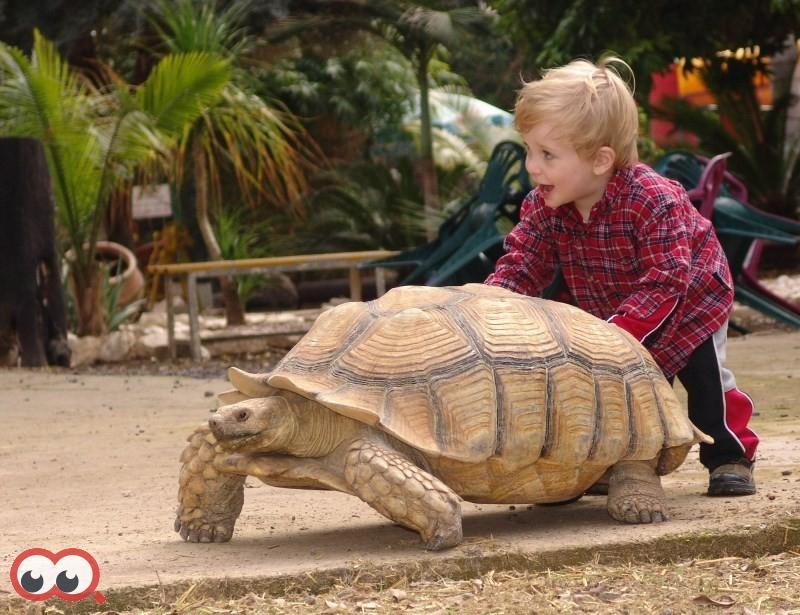 ג'ונגל כיף המקום הכיפי ביותר לילדים.